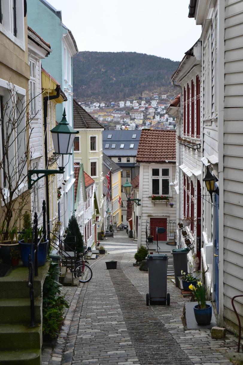 Calle noruega